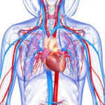 Technology is the Circulatory System of a School